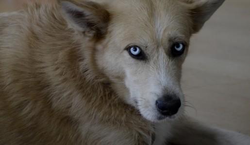 Pies i człowiek, czyli zwierzęta w twórczości Wierusza-Kowalskiego